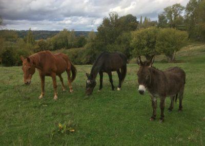Ânes et chevaux_Domaine de l'Angleterre